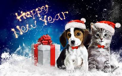 Dog Happy Cat Snow Animals Wallpapers Bow