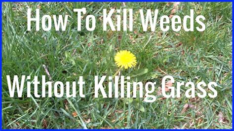 How To Kill Weeds Without Killing Grass