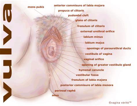 Obat Ejakulasi Dini Yg Di Seksualitas Netg Spot Dan Kesehatan Reproduksi Wanita
