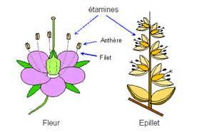 Etamine Cuisine Définition by 233 Tamine D 233 Finition Exemple Et Image
