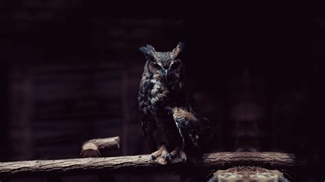 Black Owl Wallpapers by Black Owl Wallpaper Gallery