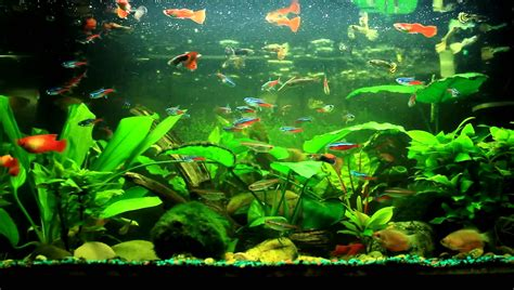 fish aquarium discus fish tank