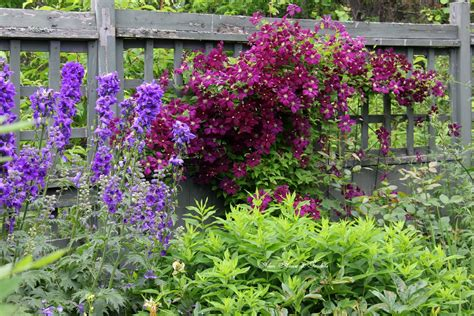 Aiken House & Gardens: Clematis in the Garden
