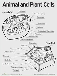 Prokaryotic And Eukaryotic Cells Pogil Key