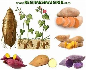 Patate Douce Plante : patate douce bienfaits et risques valeur nutritionnelle ~ Dode.kayakingforconservation.com Idées de Décoration