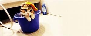 Laver Un Chaton : animal chat chaton laver seau image gif anim ~ Nature-et-papiers.com Idées de Décoration