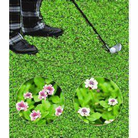 Lippia Summer Pearls : bodendecker winterhart lippia summer pearls kollektion rosa und wei 8 pflanzen pflanzenideen ~ Frokenaadalensverden.com Haus und Dekorationen