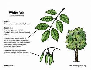 How Trees Grow Diagram