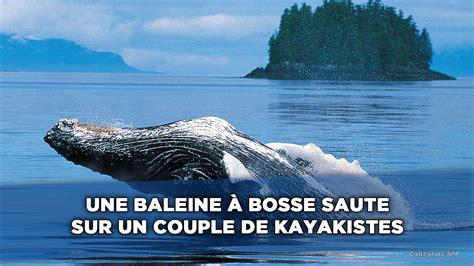 sauter cuisine une baleine à bosse saute sur deux kayakistes 20minutes tv