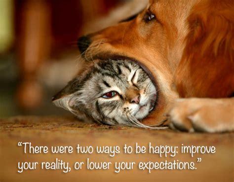 inspirational cat quotes quotesgram