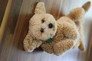 12 Puppy breeds that look like teddy bears - Page 2 of 3 ...