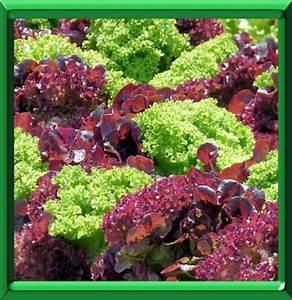 Refaire Son Jardin Gratuitement : potager le creer ou le refaire page 1 ~ Premium-room.com Idées de Décoration