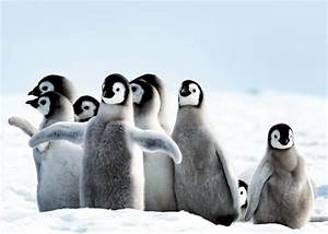 51 Baby Penguin Photos, Videos, and Facts That Will Have ...