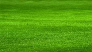 Rasen Lüften Mit Lüfterwalze : mit dieser rasenpflege wird der rasen sch n dicht und saftig gr n ~ Yasmunasinghe.com Haus und Dekorationen