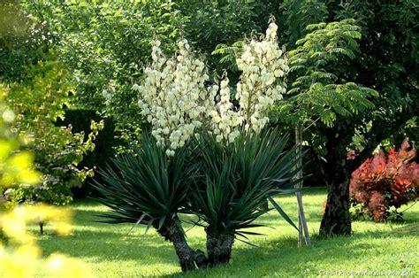 yucca exterieur resistant au gel yucca exterieur resistant au gel 28 images yucca jardin tout plante resistant au gel photos