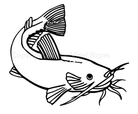 catfish drawing   clip art  clip
