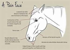 24 Best Interesting Equine Things Images On Pinterest