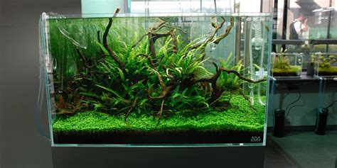 aquascaping with driftwood aquascape adana driftwood garden bonsai aquascape