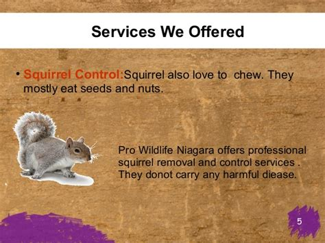 Wildlife Removal & Animal Control Services. Software Development Classes Online. United Miles Credit Cards Locksmith Dublin Ca. Network Support Companies Gwu Email Directory. Wv Personal Injury Lawyer Bank In San Antonio. Vocational Schools In California. Auto Body Shop Sacramento Medicare Com Part D. Lpn School In Tampa Fl Carbonless Paper Forms. Locksmith In Boca Raton Holiday Card Examples