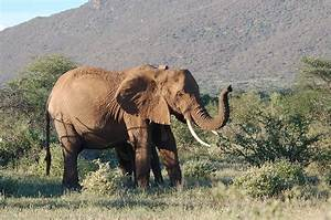 Elephant poachers are hard at work in Africa, and carbon ...