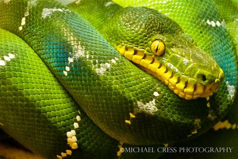 Michael Cress: Snakes- I Hate Snakes!