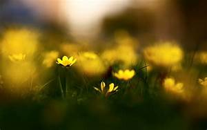 1920x1200 Yellow Flowers Macro Photography desktop PC and ...