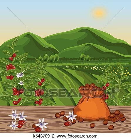 You can download in.ai,.eps,.cdr,.svg,.png formats. Coffee beans growing in farm. harvest fields Vector illustrations Clipart | k54370912 | Fotosearch