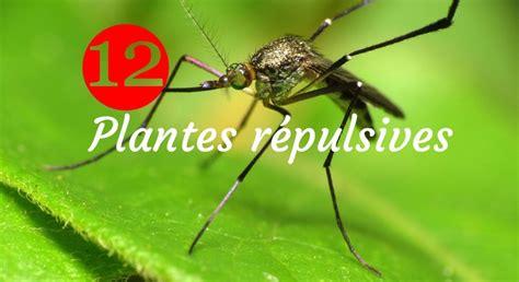 Plantes Répulsives Moustiques Fleur Anti Moustique Fleurs Anti Moustiques 510g Pour 7