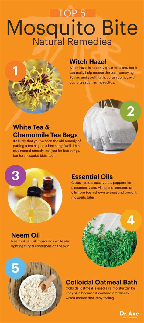 cure home remedy top 5 home remedies for mosquito bites dr axe