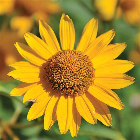curarsi con i fiori fiori di bach 174 come curarsi con i fiori schwabe