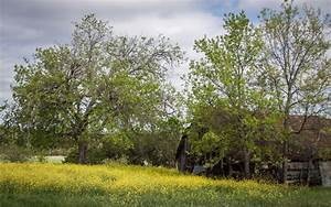 Free Images   Landscape  Tree  Branch  Sky  Field  Meadow  Prairie  Countryside  Old  Country