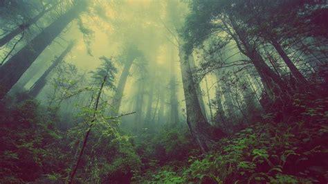 wallpaper  forest trees nebel nature mystischer