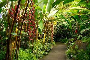 Top 5 activities for kids on the big island hawaiicom for Hilo botanical gardens