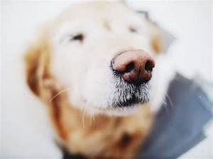 joint pain relief for old dogs