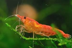 Prawning: Catching Prawns and shrimp in Eastbourne, tide ...