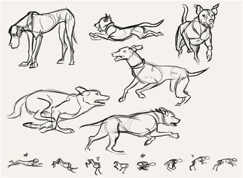 images  reference anatomy pose