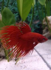 Charlieeex3's Freshwater Fish Photo (ID 39342) - Full ...