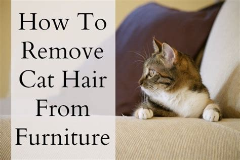 how to remove dog hair from sofa cat hair on furniture goldenacresdogs com