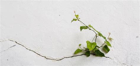 Risse Im Putz Beseitigen by Risse In Der Wand Ausbessern Risse In Der Wand Mit Acryl