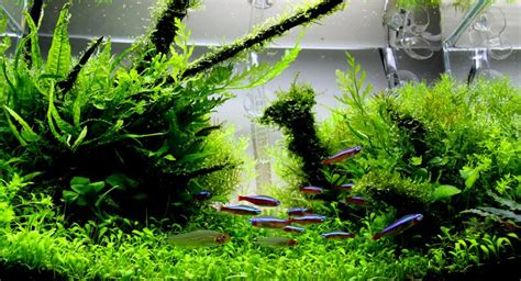 Aquascape, The Beauty Of The Inside Water Garden