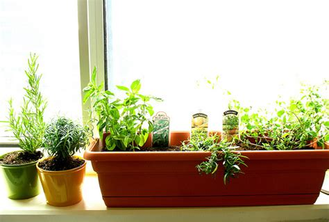 Growing Your Own Herbs And Sprouts
