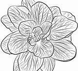 Spinach Coloring Pages Printable Print sketch template
