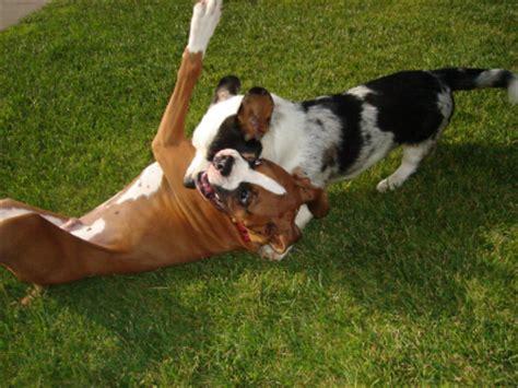 disc thrills  paws   pets ten commandments