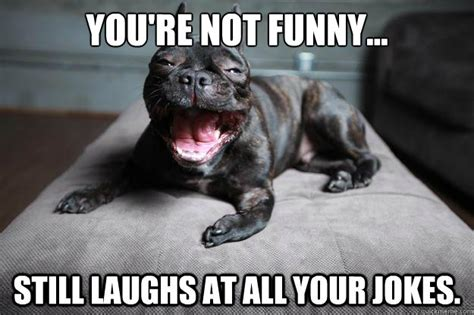 You Re Not Funny Meme - you re not funny still laughs at all your jokes mans best friend quickmeme
