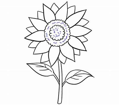 Sunflower Draw Flower Step Drawing Easy Lines