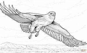 Flying Hawk Coloring Page Free Printable Coloring Pages