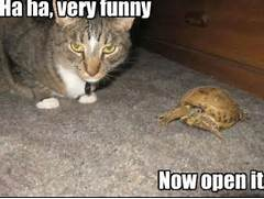 Very Funny Cat Picture...