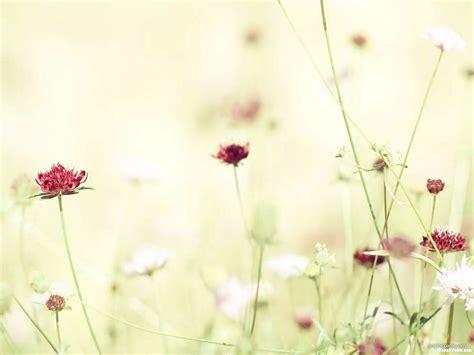 minimalist flower background  powerpoint graphicpaniccom