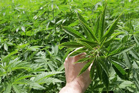 The Best Marijuana Stocks To Buy In 2018 -- The Motley Fool