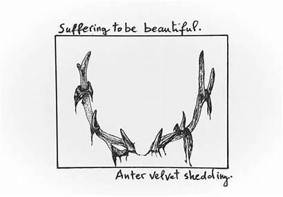 Inktober Shedding Anter Deer Velvet Enregistree Depuis